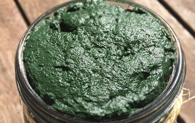 Fresh spirulina manufacturing process | Fresh Australian Spirulina